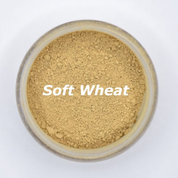 soft wheat foundation shade